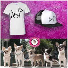 Are you a Chihuahua fanatic?