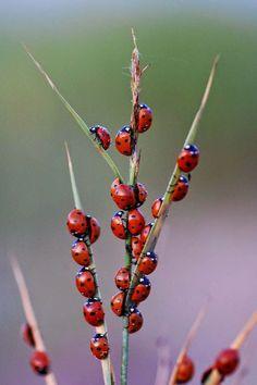 Ladybug Staff Meeting.....