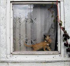 Window with felines