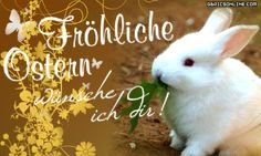 a picture for the heart 'Froehliche Ostern.gif'- One of 1494 files in category' good morning pictures' on FUNPOT. Good Morning Picture, Morning Pictures, Easter Bunny Pictures, Happy Easter, Animals, Cat Window, Austria, Switzerland, Gifs