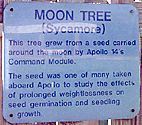 Two of the Moon Trees are located in Tallahassee, Florida