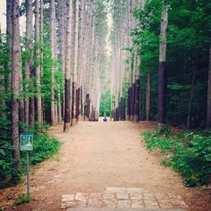 Blue Ribbon Pines Disc Golf Course in Minnesota... Hole 4, absolutely AWESOME
