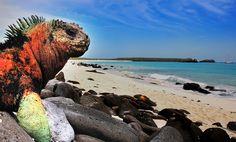 See the giant tortoise and the sea iguana on the Galapagos Islands, Ecuador <3