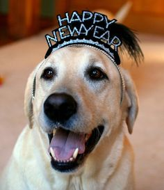 Wishing you a wonderful New Year in 2014 filled with lots of joy, love, laughter, peace, many blessings and great animals! HAPPY NEW YEAR! Dog Paws, Pet Dogs, Dogs And Puppies, Labrador Puppies, Labrador Retrievers, Golden Retrievers, Doggies, I Love Dogs, Puppy Love