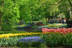 5 reasons to visit Keukenhof Flower Garden - The Bunches Blog   Bunches the online florist