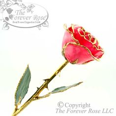 PRODUCT DESCRIPTION: The Bright Pink Forever Rose™ has been carefully selected at the peak of its  beauty and perfectly preserved in a durable lacquer shell. It is then trimmed and plated with a rich 24K gold finish to create a breathtaking masterpiece for your life-time enjoyment. With over 40 meticulous steps and five days of hand work by skilled artisans and technicians, each Forever Rose™ is one-of-a-kind, unique and everlasting, like your love! The perfect gift for Valentine's