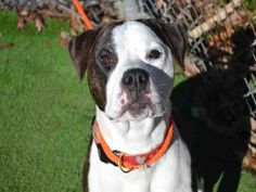 Petfinder.com is the world's largest database of adoptable pets and pet care information. Updated daily, search Petfinder for one of over 300,000 adoptable pets and thousands of pet-care articles!