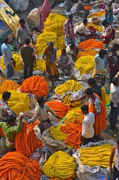 Marigolds at dawn - Calcutta Flower Market on the Hooghly.
