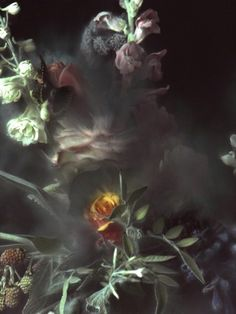 Find the latest shows, biography, and artworks for sale by Ori Gersht. Photographer and video artist Ori Gersht turns his lens on sites of collective trauma,… Beautiful Flowers, Beautiful Pictures, Belle Plante, Midnight Garden, Square Art, Contemporary Photographers, Still Life Photography, Art Photography, Dark Art