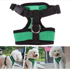 dog harness puppy color red and blue size s: neck 27 chest32-45cm size m: neck 33 chest 38-52cm size L: neck 38cm chest 50-70cn size xl: neck 42 chest 57-80cm  Order via WhatsApp 087896532077 & LINE @wec7207p (pake @) #puppies #onlinepetshop #petshop #makanananjing #puppy #sofa #pawbulous #petshopindo #petshopjambi #petbed #dogfood #indodog #mainananjing #doglover #cute #anjinglucu #hamster #catbed #dogbed #aksesorisanjing #aksesoriskucing #talianjing #dogshirt #bajuanjing #dogclothing…