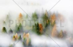 Misty Autumn - Fototapeter & Tapeter - Photowall
