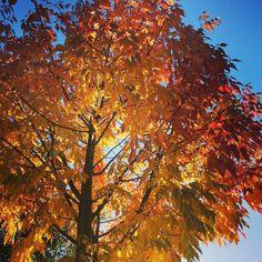 cladelcroix:  Soleil d'automne #fall #autumn #leaves #falltime...