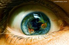 Fish eye photography animals eyes art weird