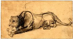 Rembrandt Harmenszoon VAN RIJN - Study of a lioness eating a bird, lying down with her head to l. Black chalk, with grey wash, touched with white, on pale brown prepared paper Rembrandt Etchings, Rembrandt Self Portrait, Rembrandt Drawings, Rembrandt Paintings, Paul Klee Art, Web Gallery Of Art, European Paintings, Leiden, Art Sketchbook