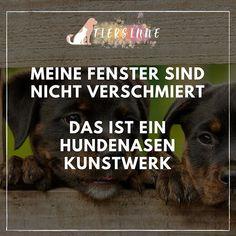 Aber Bald Kommt Die Post Ja Wieder Lustige Hunde Hundeschule