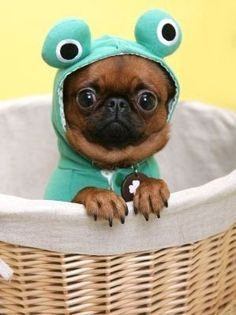 "Kermit the dog I don't like clothes on puppies but this is so funny. Hope the ""fun"" is not one-sided though..."