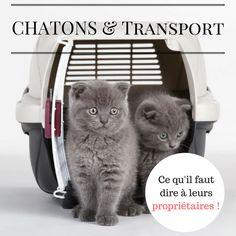 [BLOG] Chatons & Transport : ce que vous devez dire à leurs nouveaux propriétaires - PROGRAMME PRIVILÈGE ÉLEVEURS