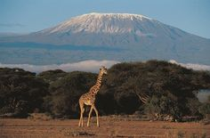 Trek Kilimanjaro - Kilimanjaro is the highest mountain in Africa, highest free-standing mountain in the world and has three volcanic cones. Trekking there will take you through dense forest, over rocky terrain and up ice glaciers and will be a trip of a lifetime. 18th - 27th February 2015