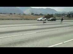 Lo que hicieron estos automovilistas por los perros en la autopista, es heroísmo puro | Upsocl