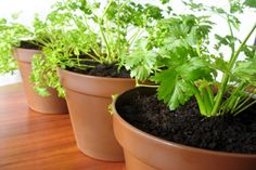 """Create a """"Pot"""" Garden and Save Money 