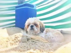 Taking a tan at the beach