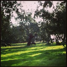 Otoño en la dehesa #nature # naturaleza www.cortijosydehesa.com