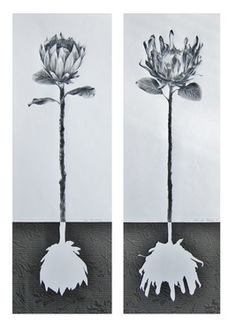 Saatchi Art: Protea Roots (Diptych) Drawing by Ira van der Merwe Art Painting, Landscape Paintings Acrylic, Art Painting Oil, Watercolor Artists, Flower Art, Oil Painting Abstract, Diptych, Saatchi Art, Watercolor Paintings Abstract
