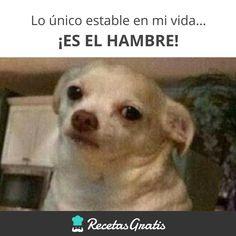 Tengo hambre! #RecetasGratis #FrasesDivertidas #Expresiones #Refranes #Meme #Quotes #FrasessobreComida #FrasedelDía #SabíasQué #HumorenEspañol #MemesEspañol #MemesDivertidos #Chihuahua #Chiguagua