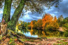 Seasons Autumn Rivers HDR Trunk tree Trees Nature