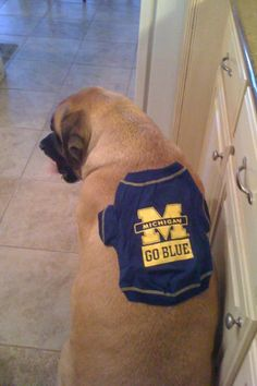 Our sweet English Mastiff, Mollie, was so sad that the University of Michigan dog t shirt was not her size!  Sadly, we unexpectedly lost her to bone cancer this year.  She was a therapy dog and a very special girl.  University of Michigan