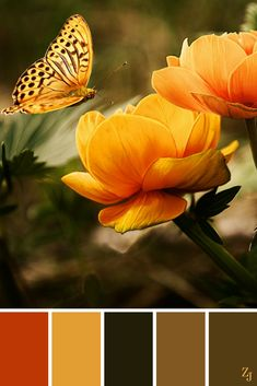 ZJ Colour Palette 106 #colourpalette #colourinspiration