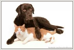 Best friends Hessel and Hannes