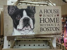 So true. Boston terrier love