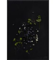MAD/PLAKAT - Sorte bær 50x70