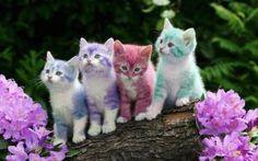 Rengarenk kediler! Amma da şirinler ^^