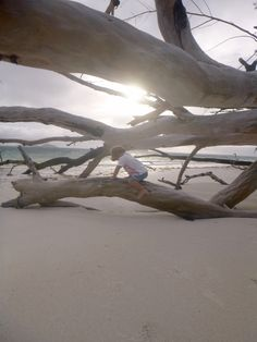 Family walk on the beach. Praslin, Seychelles
