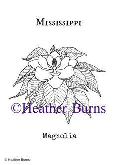mississippi state flower magnolia