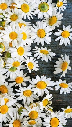 Find images and videos about flowers, wallpaper and iphone on We Heart It - the app to get lost in what you love. Daisy Wallpaper, Flower Background Wallpaper, Tumblr Wallpaper, Nature Wallpaper, Cool Wallpaper, Wallpaper Ideas, Daisy Background, Tumblr Backgrounds, Flower Backgrounds