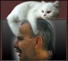 El tiempo que se pasa con los gatos nunca es tiempo malgastado. Sigmund Freud (1856-1939)