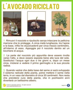 L'Avocado riciclato