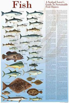 1000 images about sustainable seafood on pinterest for Most sustainable fish