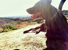 5 Tips for Biking with Your Dog | Singletracks Mountain Bike Blog