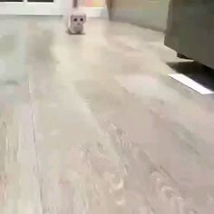 Walking with my little paws - Tiere - Gatos Cute Little Animals, Cute Funny Animals, Funny Cats, Cute Puppies, Cute Dogs, Cute Babies, Cute Cats And Kittens, Kittens Cutest, Crazy Cats