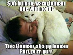 Soft kitty song variation