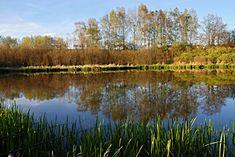 jižní čechy rybníky - Hledat Googlem