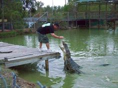 Gator Country in Beaumont Texas. Kids love it.