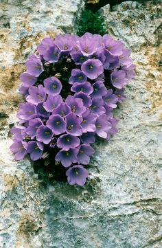 Экзотические Цветы, Фиолетовые Цветы, Дикие Цветы, Красивые Цветы, Сад С Орхидеями, Садовые Дорожки, Тайные Сады, Розовые Деревья, Окрашенные Цветы