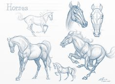 254 best Animal Anatomy & Tutorials images on Pinterest | Drawing ...