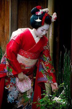 See a Geisha or Maiko in Kyoto Geisha Japan, Geisha Art, Kyoto, Japanese Beauty, Japanese Girl, Japanese Fashion, Afrique Art, Kimono Japan, Creation Art