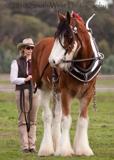 Clydesdale Love these horses